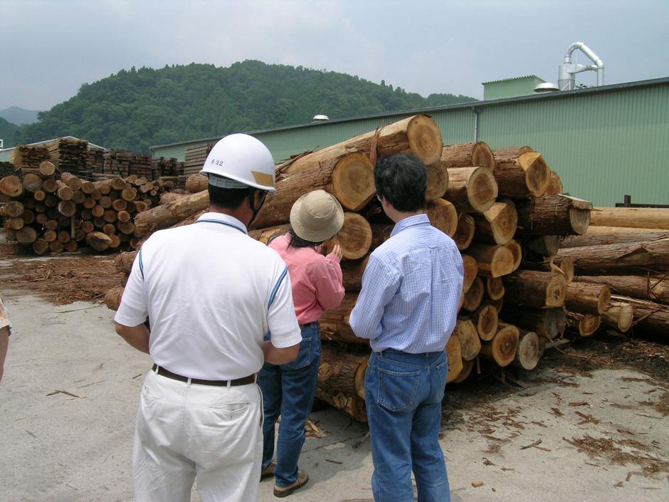吉野杉の製材所の丸太をストックしている写真